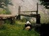 081109-panda-hlg-7arp600x350.jpg
